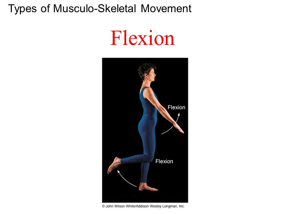 Types of Musculo-Skeletal Movement