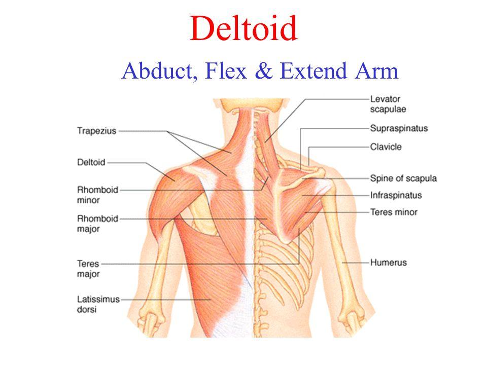 Abduct, Flex & Extend Arm