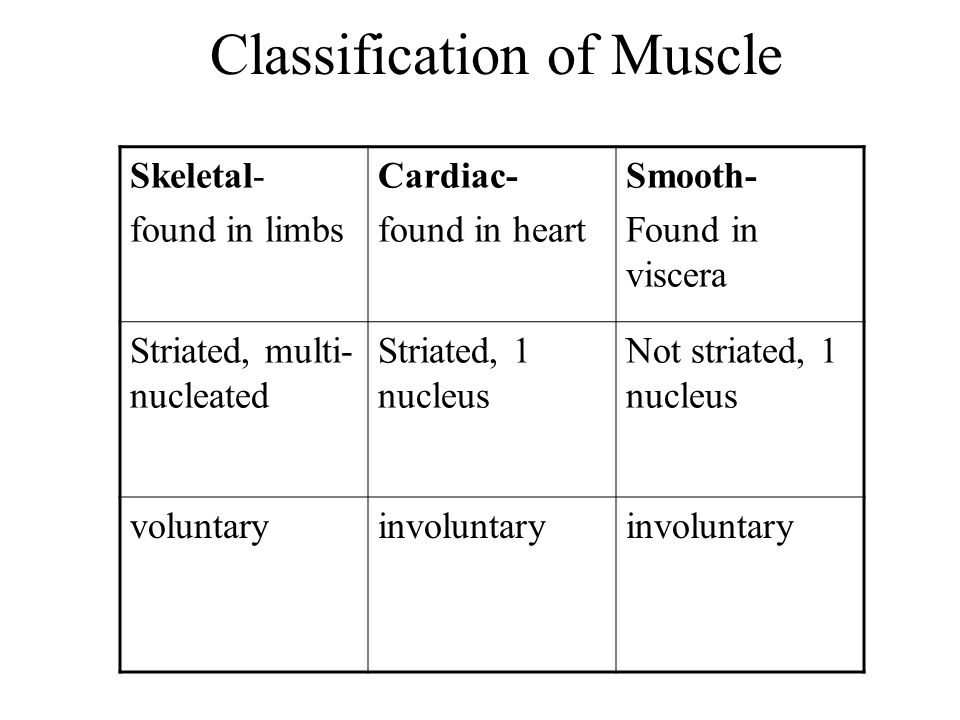 Classification of Muscle