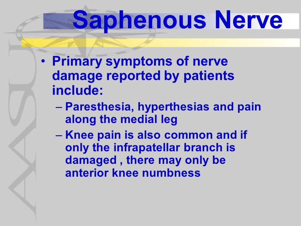 Saphenous Nerve Primary symptoms of nerve damage reported by patients include: Paresthesia, hyperthesias and pain along the medial leg.