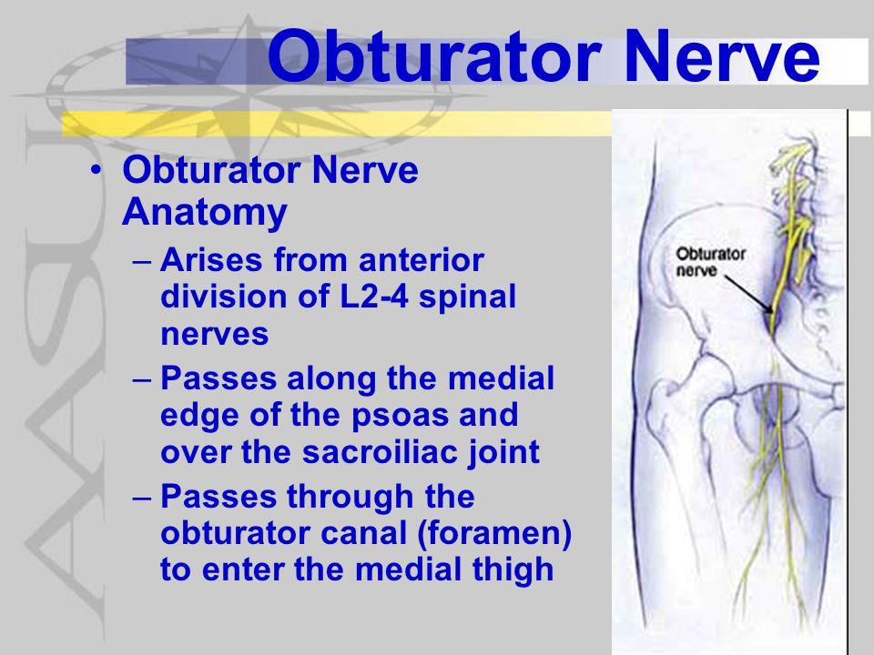 Obturator Nerve Obturator Nerve Anatomy