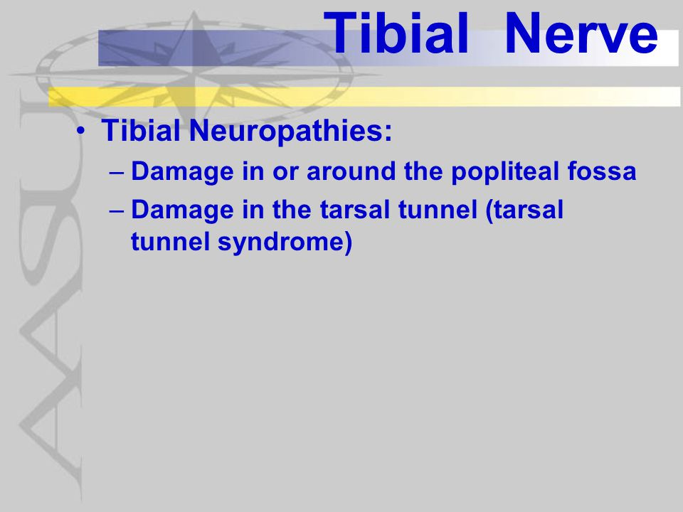 Tibial Nerve Tibial Neuropathies: