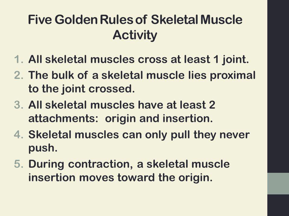Five Golden Rules of Skeletal Muscle Activity