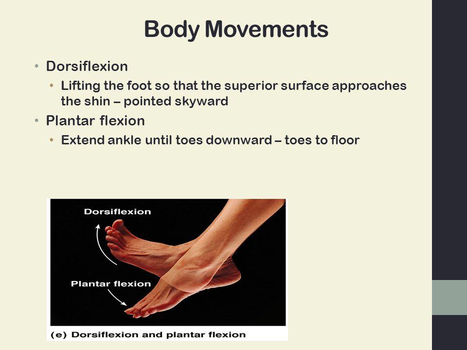 Body Movements Dorsiflexion Plantar flexion
