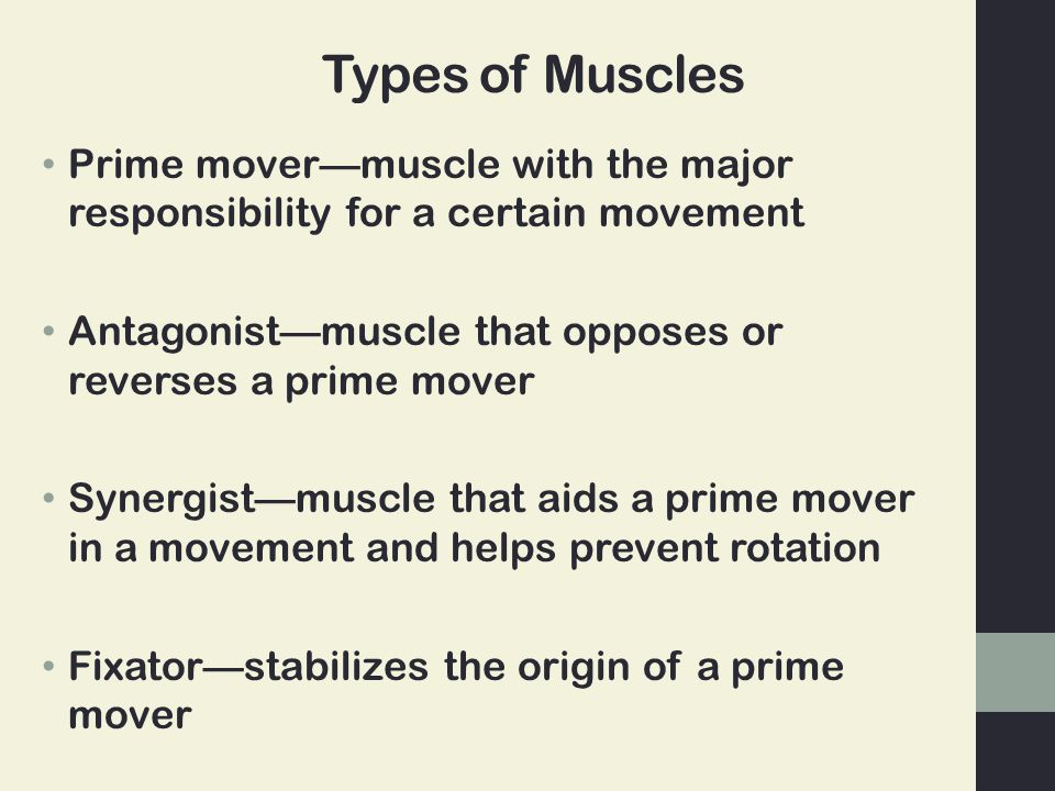 Types of Muscles Prime mover—muscle with the major responsibility for a certain movement. Antagonist—muscle that opposes or reverses a prime mover.