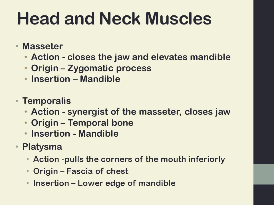 Head and Neck Muscles Masseter