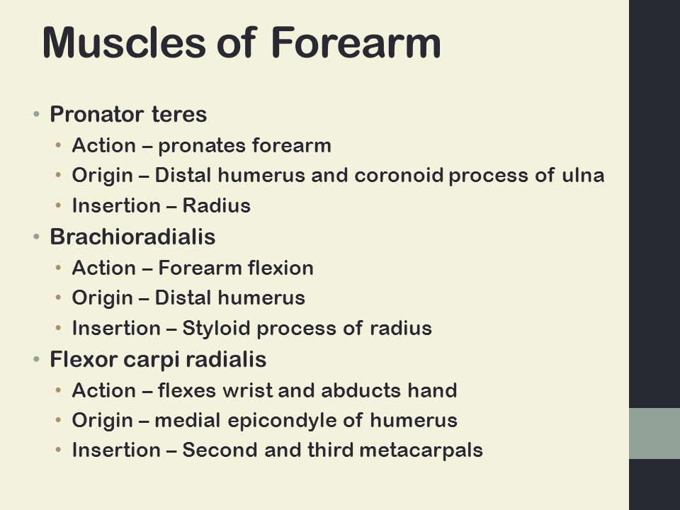 Muscles of Forearm Pronator teres Brachioradialis