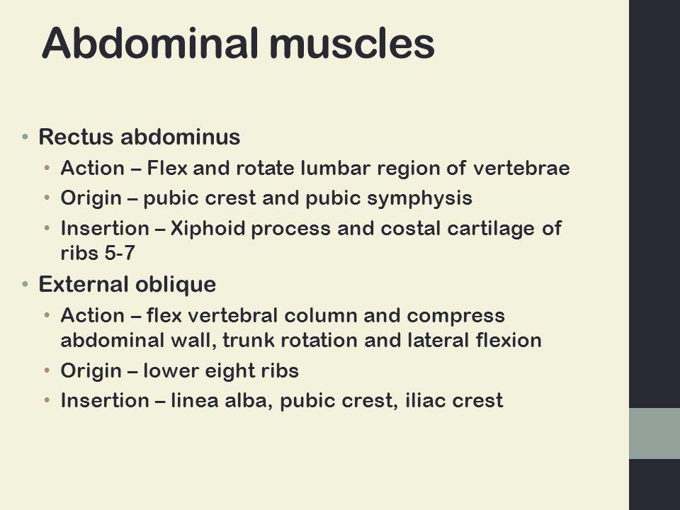 Abdominal muscles Rectus abdominus External oblique