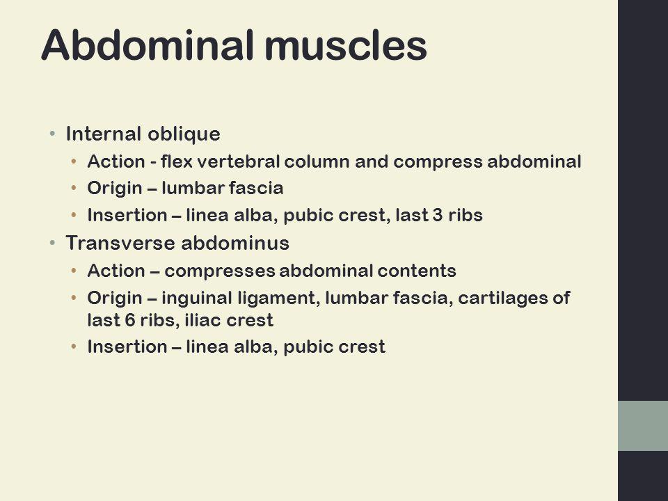 Abdominal muscles Internal oblique Transverse abdominus