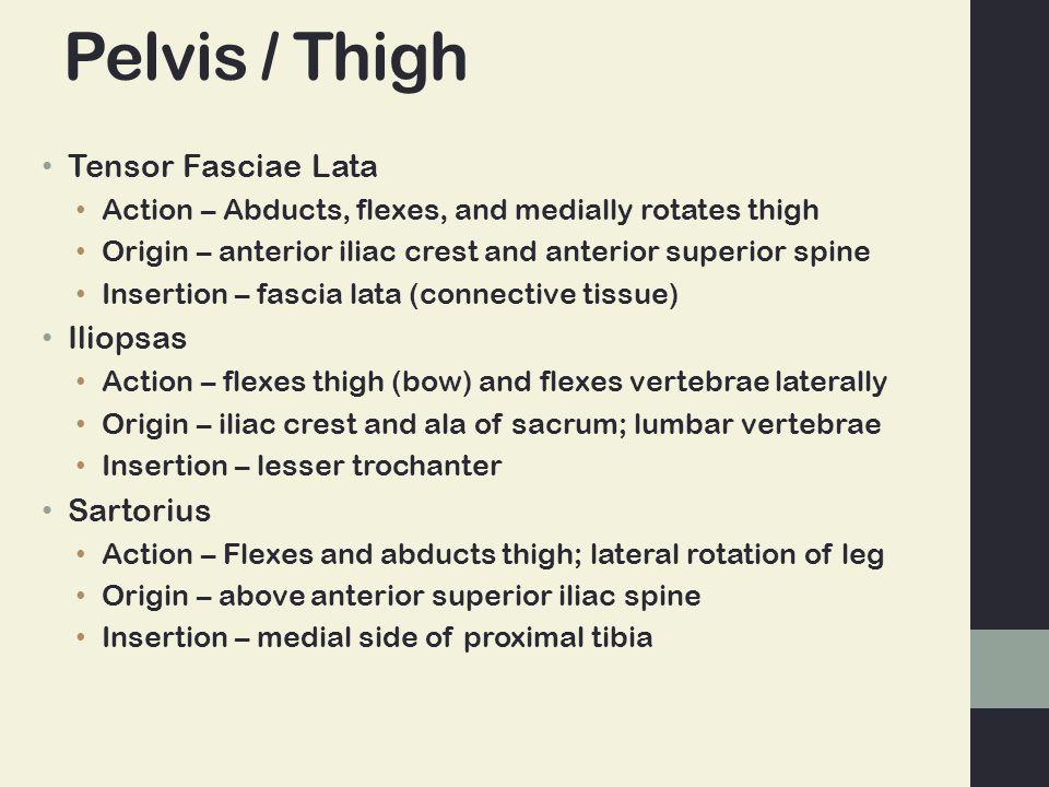 Pelvis / Thigh Tensor Fasciae Lata Iliopsas Sartorius