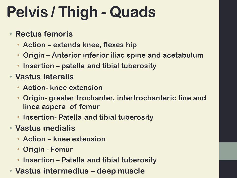 Pelvis / Thigh - Quads Rectus femoris Vastus lateralis Vastus medialis