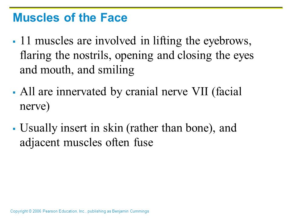Muscles of the Face 11 muscles are involved in lifting the eyebrows, flaring the nostrils, opening and closing the eyes and mouth, and smiling.