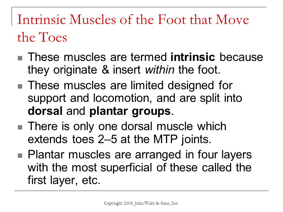 Intrinsic Muscles of the Foot that Move the Toes