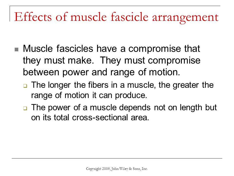 Effects of muscle fascicle arrangement