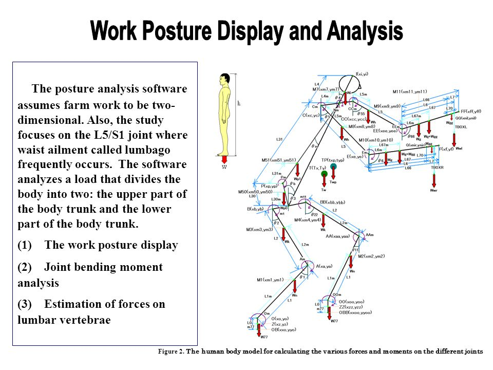 Work Posture Display and Analysis