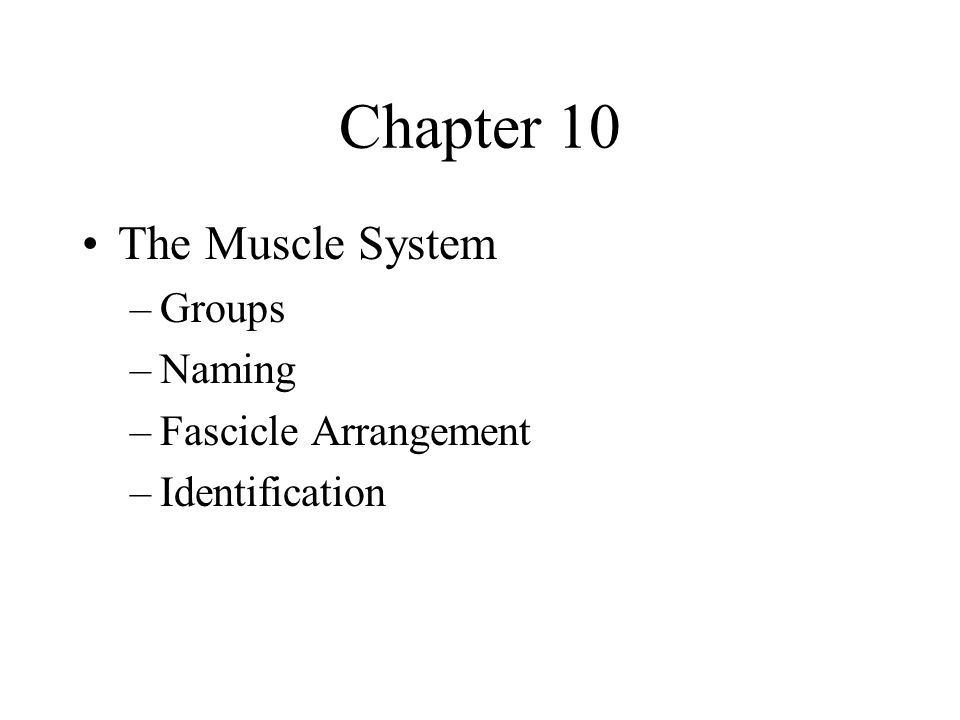Chapter 10 The Muscle System Groups Naming Fascicle Arrangement