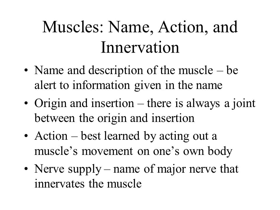 Muscles: Name, Action, and Innervation