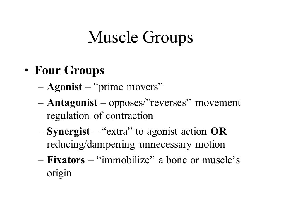 Muscle Groups Four Groups Agonist – prime movers