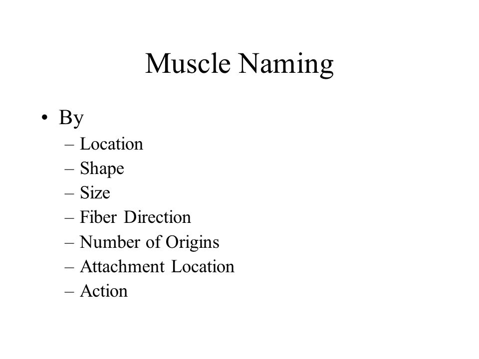 Muscle Naming By Location Shape Size Fiber Direction Number of Origins