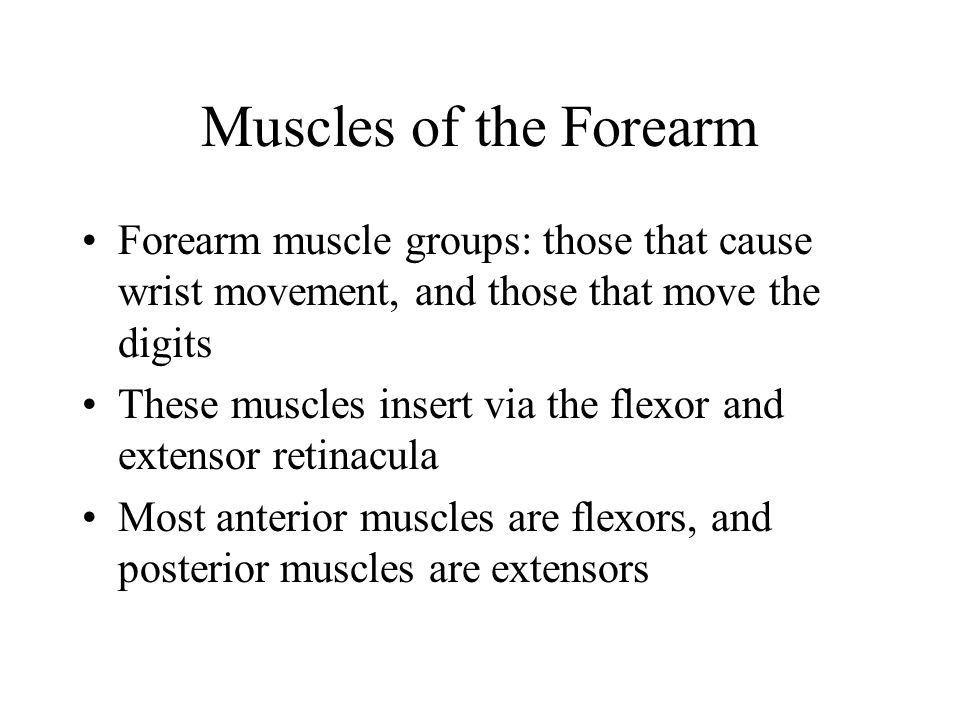 Muscles of the Forearm Forearm muscle groups: those that cause wrist movement, and those that move the digits.