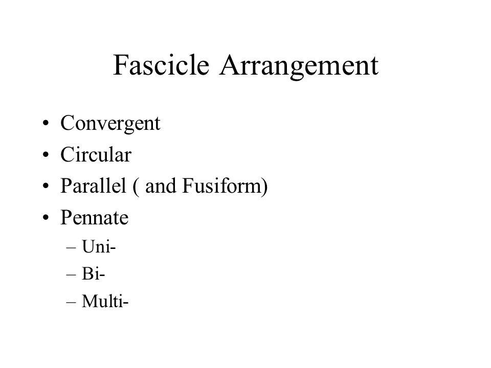 Fascicle Arrangement Convergent Circular Parallel ( and Fusiform)
