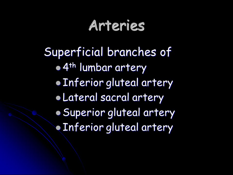 Arteries Superficial branches of 4th lumbar artery