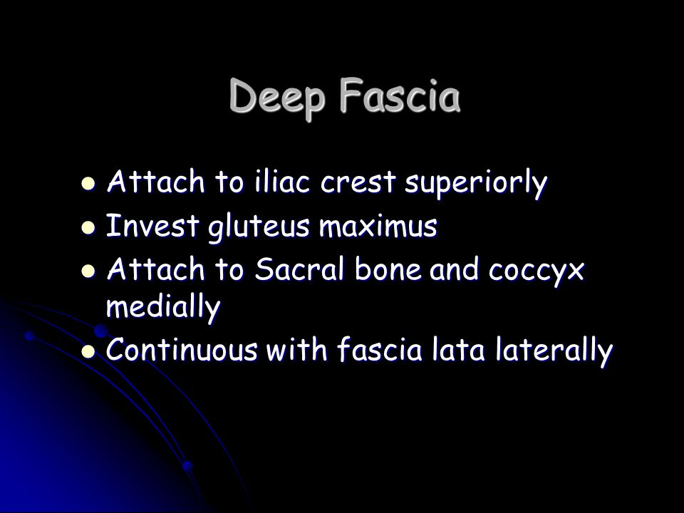 Deep Fascia Attach to iliac crest superiorly Invest gluteus maximus