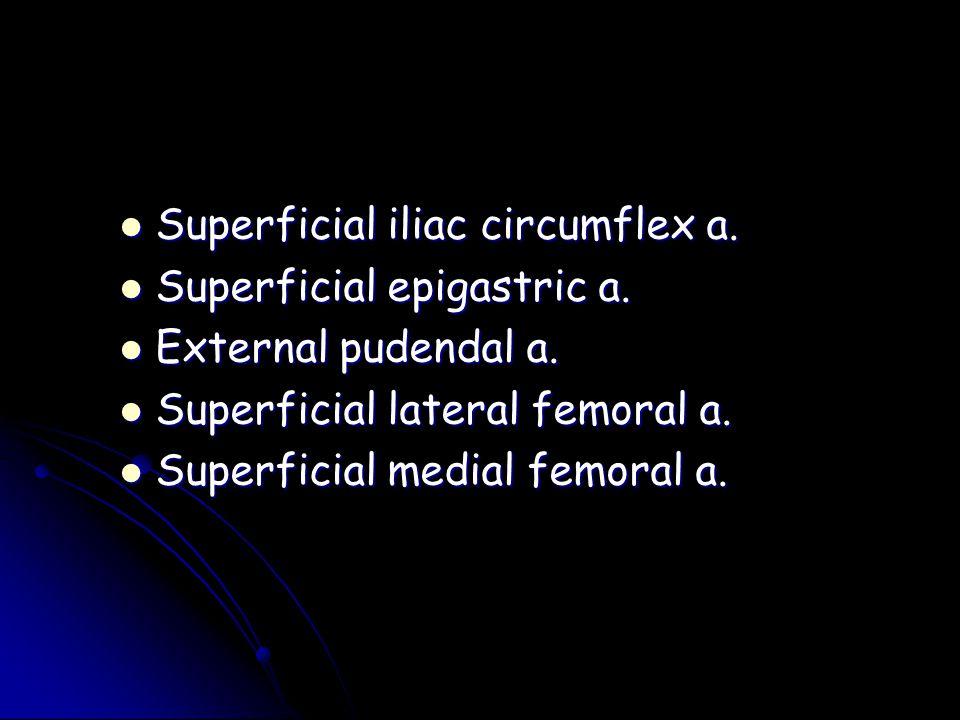 Superficial iliac circumflex a.