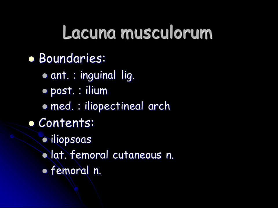 Lacuna musculorum Boundaries: Contents: ant.:inguinal lig. post.:ilium
