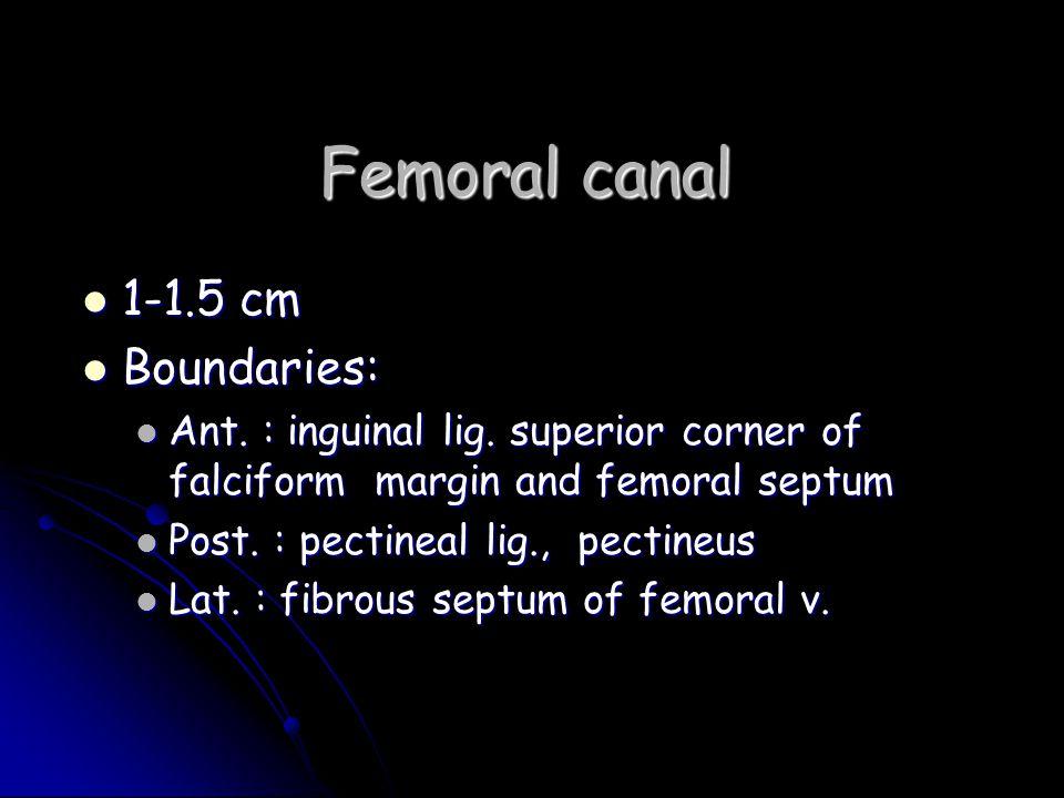 Femoral canal 1-1.5 cm Boundaries: