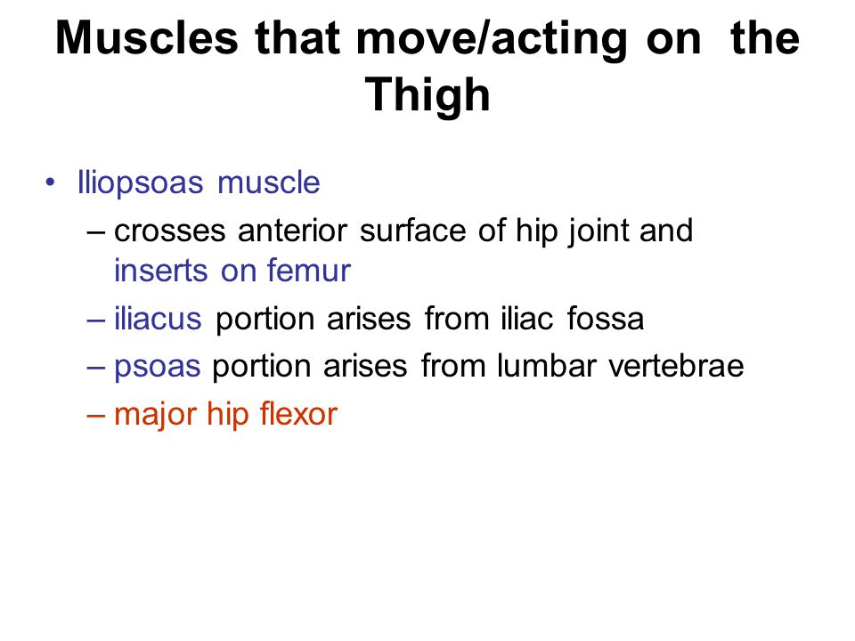 Muscles that move/acting on the Thigh