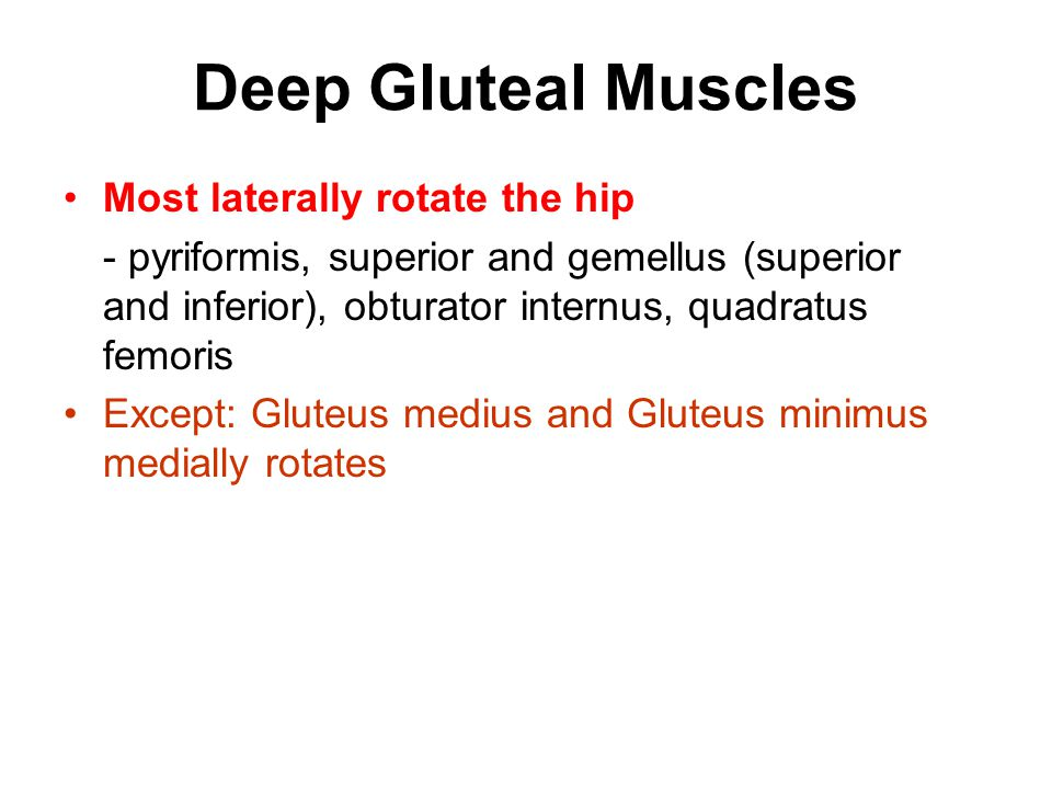 Deep Gluteal Muscles Most laterally rotate the hip