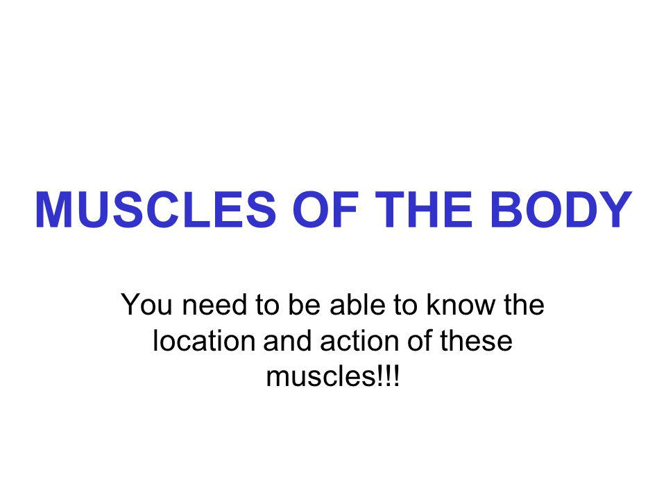 MUSCLES OF THE BODY You need to be able to know the location and action of these muscles!!!