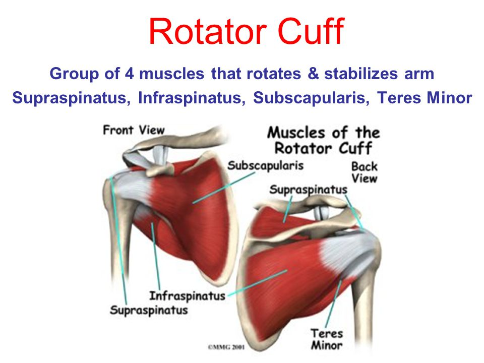 Rotator Cuff Group of 4 muscles that rotates & stabilizes arm