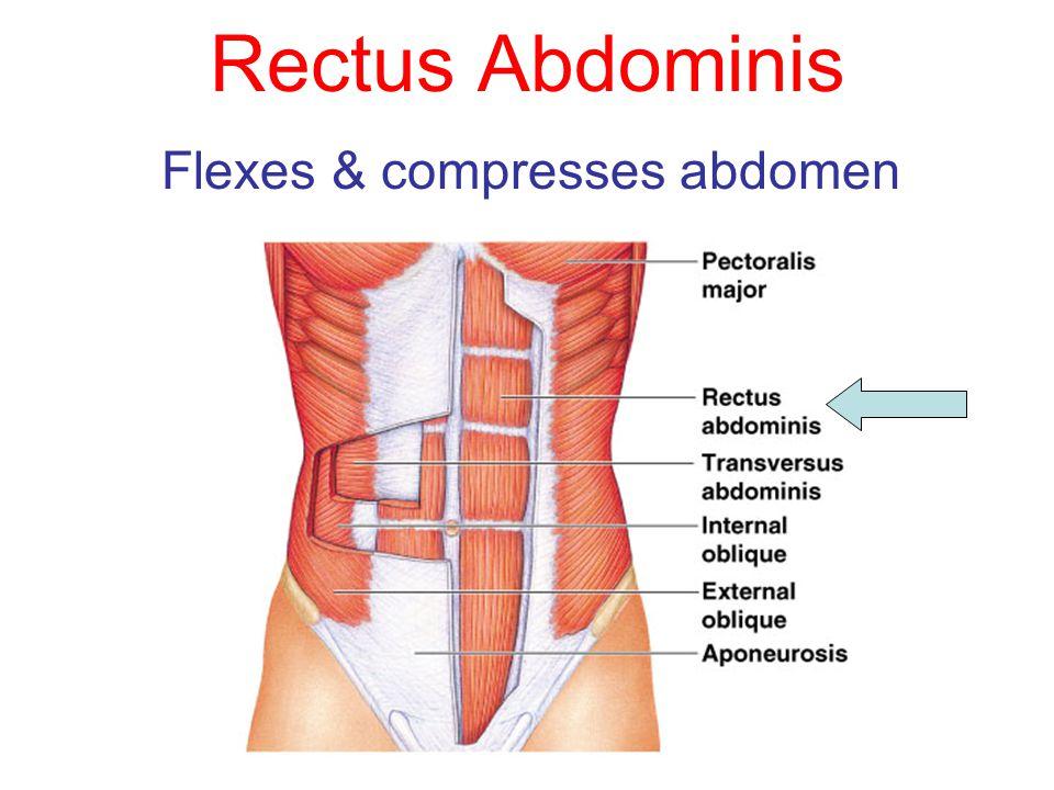 Flexes & compresses abdomen