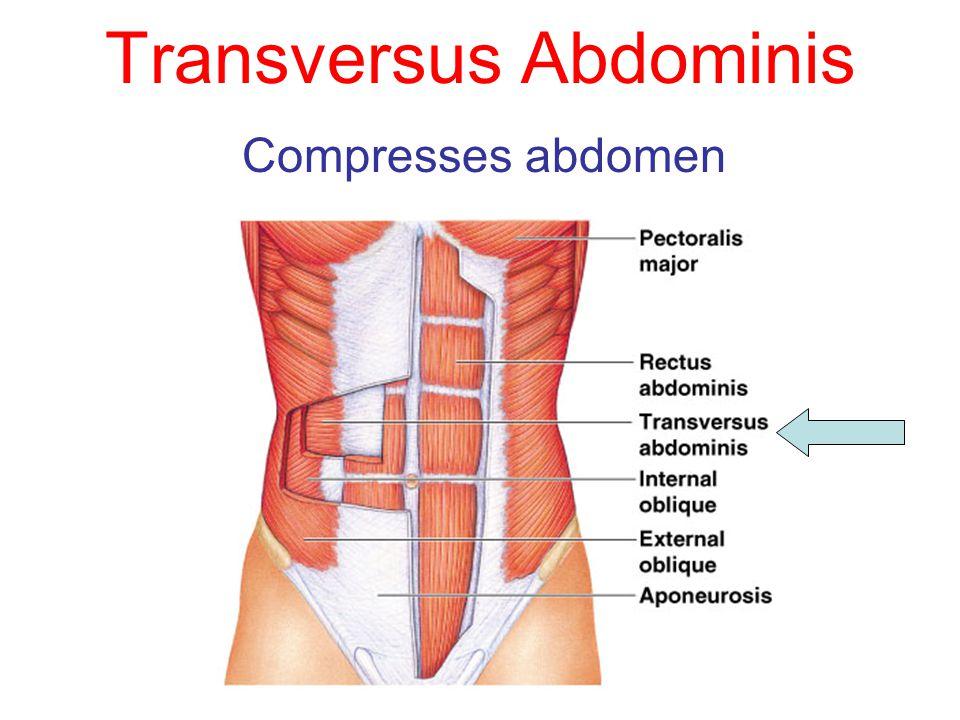 Transversus Abdominis