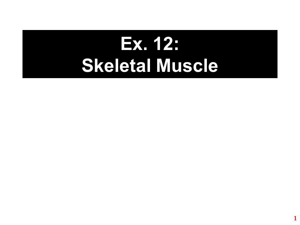 Ex. 12: Skeletal Muscle