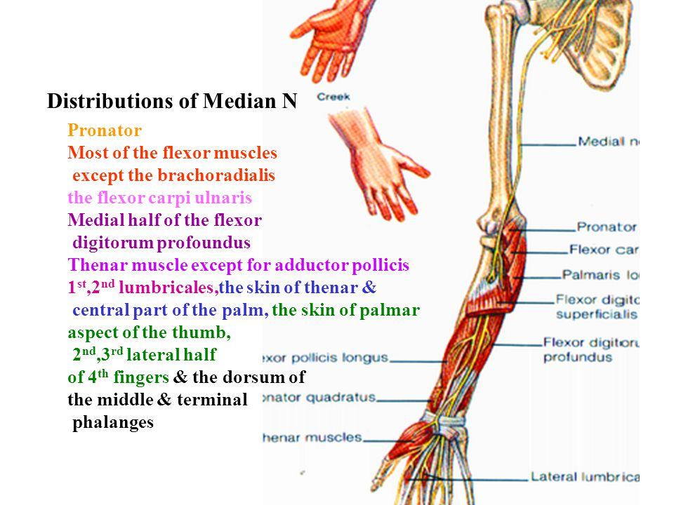 Distributions of Median N
