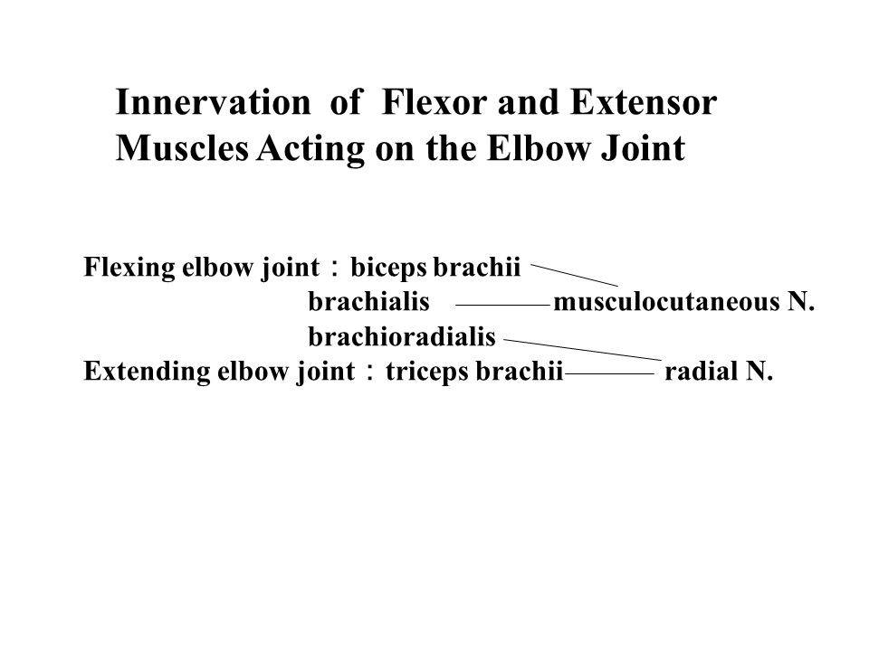 Innervation of Flexor and Extensor Muscles Acting on the Elbow Joint