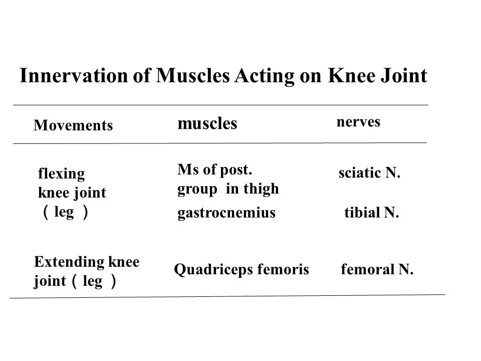 Innervation of Muscles Acting on Knee Joint