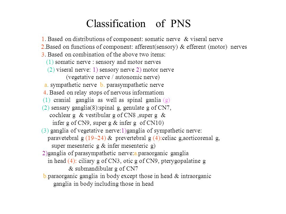 Classification of PNS 1. Based on distributions of component: somatic nerve & viseral nerve.