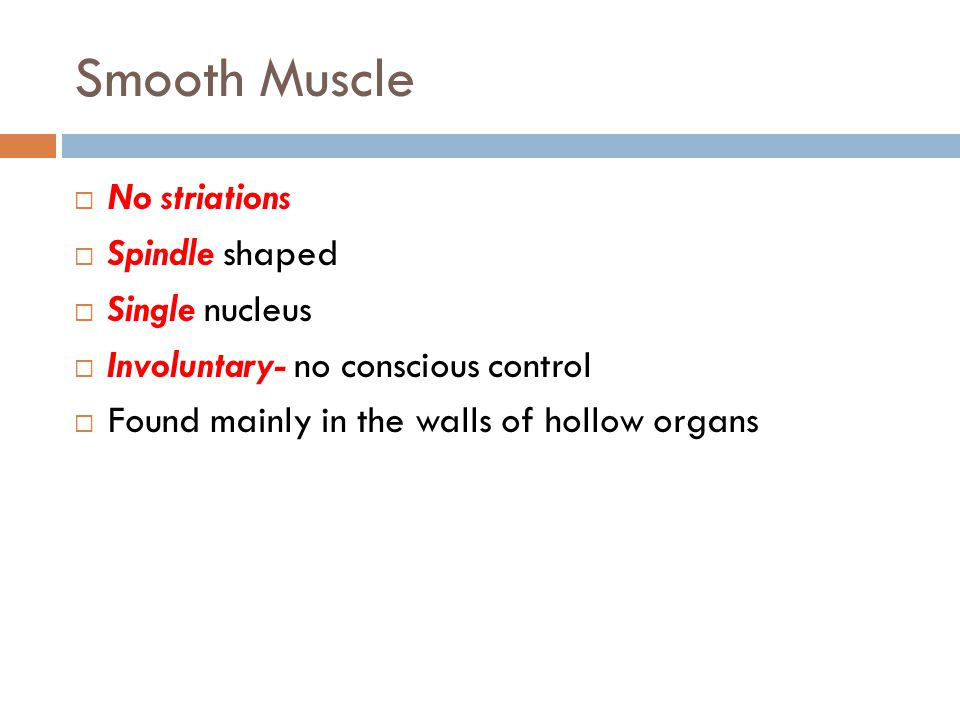 Smooth Muscle No striations Spindle shaped Single nucleus