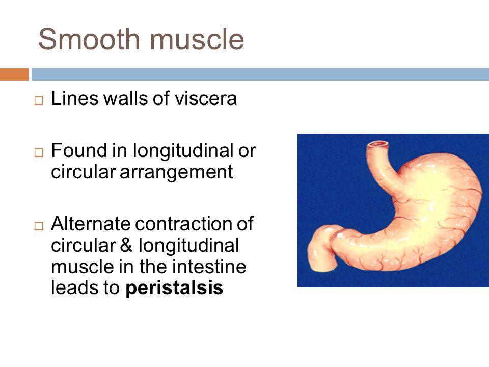 Smooth muscle Lines walls of viscera