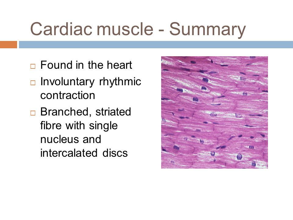 Cardiac muscle - Summary