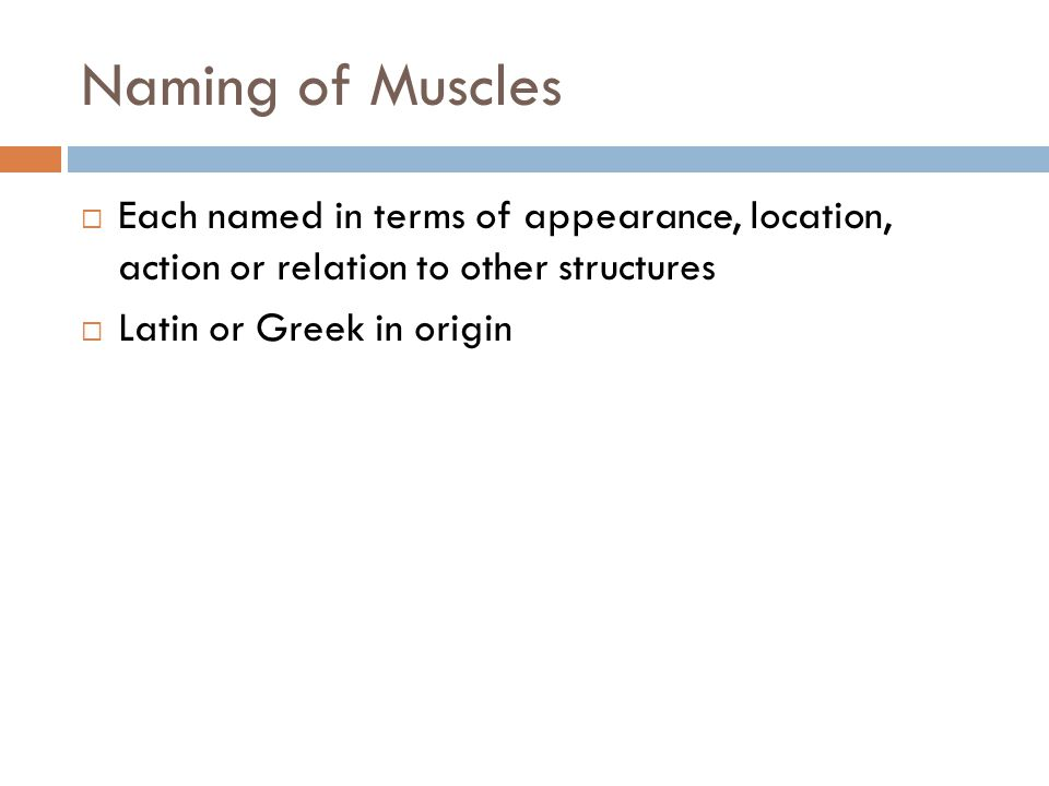 Naming of Muscles Each named in terms of appearance, location, action or relation to other structures.