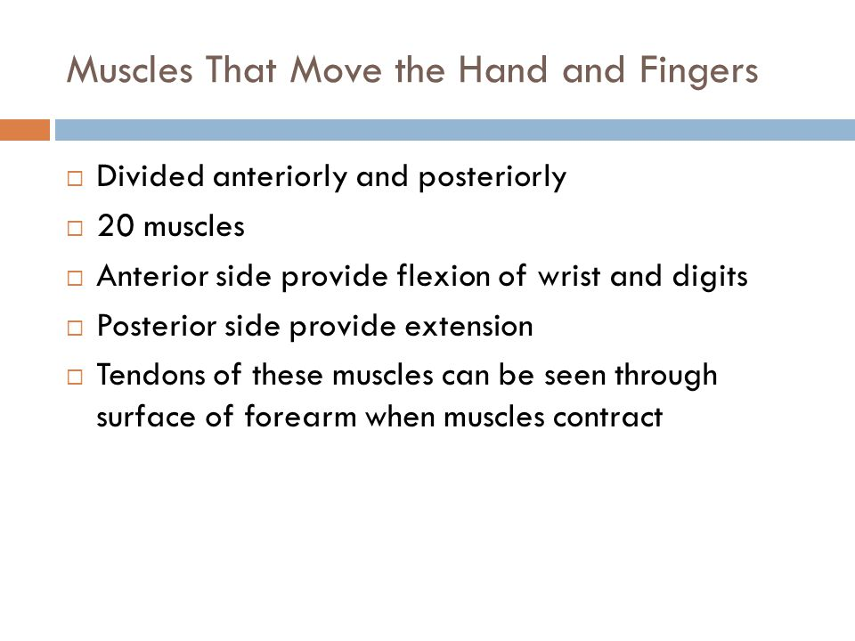 Muscles That Move the Hand and Fingers