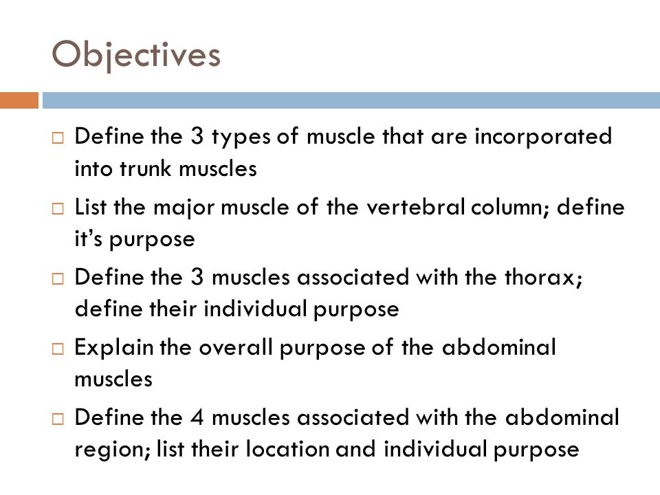 Objectives Define the 3 types of muscle that are incorporated into trunk muscles.