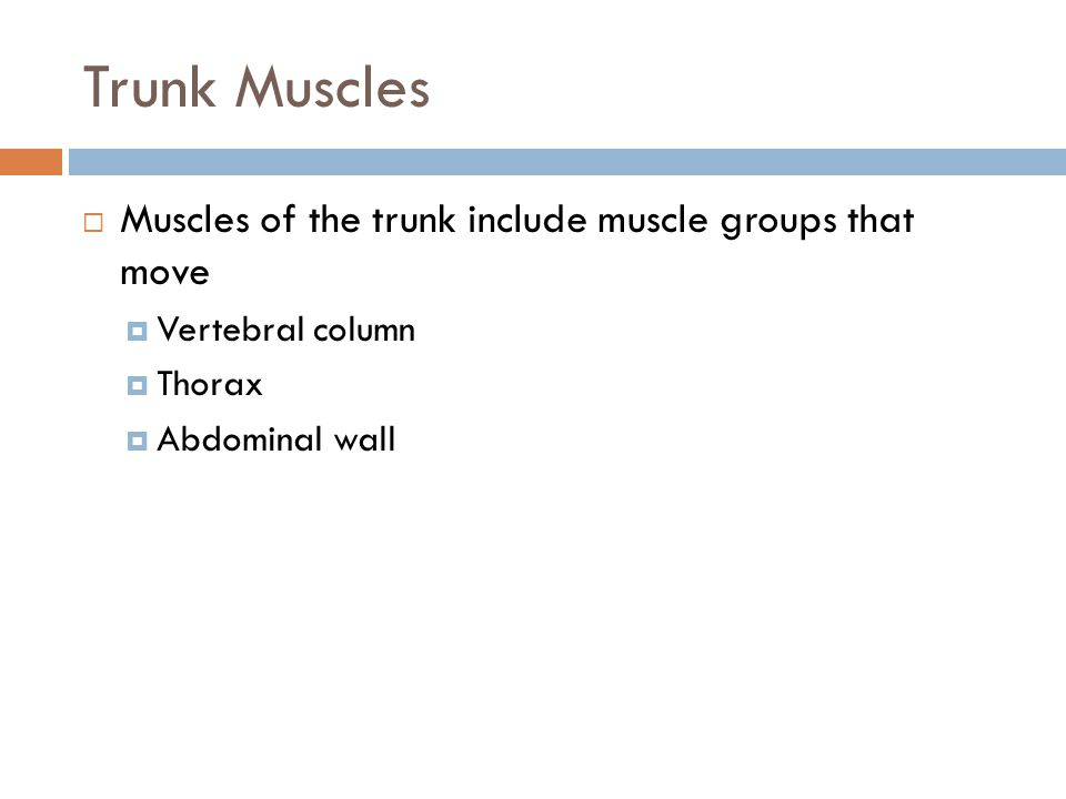 Trunk Muscles Muscles of the trunk include muscle groups that move