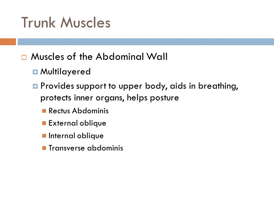 Trunk Muscles Muscles of the Abdominal Wall Multilayered