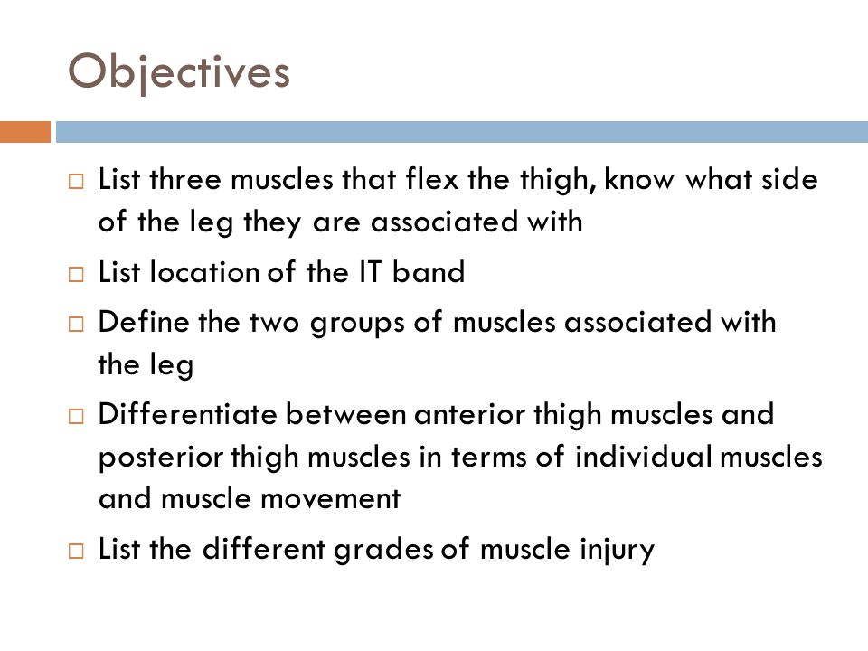 Objectives List three muscles that flex the thigh, know what side of the leg they are associated with.